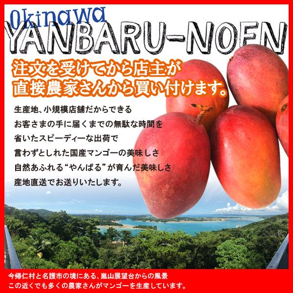 やんばるマンゴー特徴